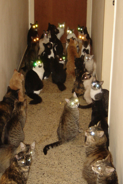 Beware_the_cats