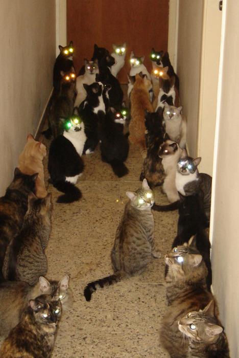Beware_the_cats